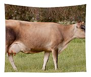 Jersey Cow In Pasture Tapestry