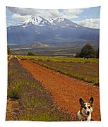 Johnny And The Mountain Tapestry