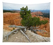 Juniper Tree Clings To The Canyon Edge Tapestry