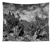 Juniper Trees At The Ghost Ranch Black And White Tapestry
