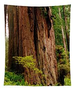 Kevin And The Big Tree - Redwood National Forest Tapestry