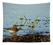 Kildeer Hunting For Worms Tapestry