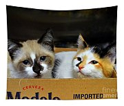 Kittens In A Box Tapestry