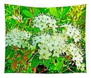 Labrador Tea In Sawtooth National Recreation Area-idaho  Tapestry