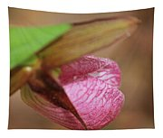 Lady Slipper At Moore State Park Close Up 1 Tapestry