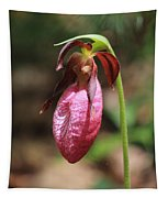 Lady Slipper At Moore State Park Close Up 2 Tapestry