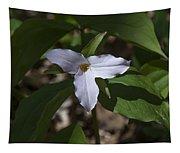 Large-flower Trillium Dspf277 Tapestry