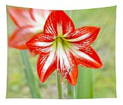 Lensbaby 2 Orange Red And White Amaryllis Blooms Tapestry