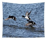 Lesser Scaup Ducks Tapestry