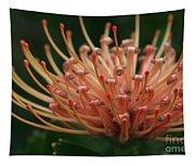 Leucospermum  Pincushion Protea Tropical Sunburst Protea Flower  Tapestry