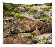 Lichens And Moss In Glen Strathfarrar Tapestry