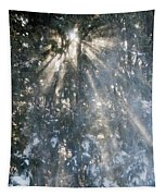 Light Throught The Trees Tapestry