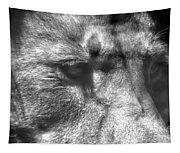 Lion Eyes Tapestry