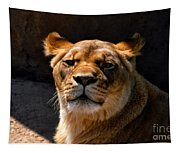 Lioness Hey Are You Looking At Me Tapestry
