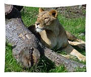Lioness2 Tapestry