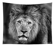 Lion's Eyes Tapestry