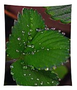 Liquid Pearls On Strawberry Leaves Tapestry
