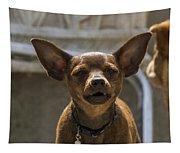 Little Dog Tapestry