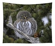 Little One - Northern Pygmy Owl Tapestry