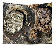 Little Owl 4 Tapestry