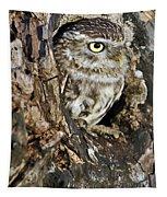 Little Owl In Hollow Tree Tapestry