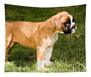 long tailed Boxer Puppy in the sun Tapestry
