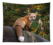 Looking Pretty Foxy Tapestry