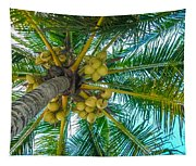 Looking Up A Coconut Tree Tapestry