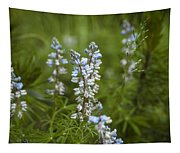 Lupine Tapestry