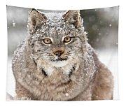 Lynx Stare Tapestry
