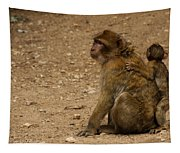 Macaque Monkeys Tapestry