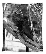 Macaws Of Color B W 15 Tapestry