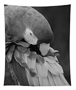 Macaws Of Color B W 17 Tapestry