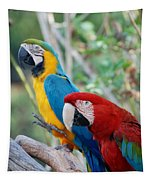 Macaws Of Color23 Tapestry