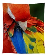 Macaws Of Color25 Tapestry