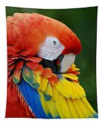 Macaws Of Color28 Tapestry