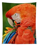 Macaws Of Color29 Tapestry