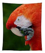 Macaws Of Color32 Tapestry