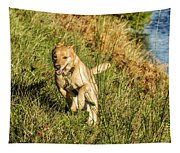 Maisie - Boundless Energy Tapestry
