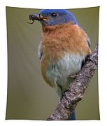 Male Eastern Bluebird With Spider Tapestry