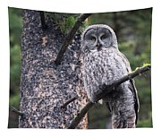 Male Great Gray Owl Tapestry