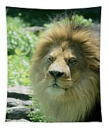 Male Lion Up Close Tapestry