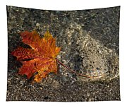 Maple Leaf - Playful Sunlight Patterns Tapestry