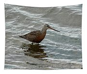 Marbled Godwit Tapestry