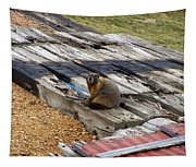 Marmot Resting On A Railroad Tie Tapestry