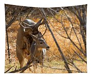Mating Mulies Tapestry