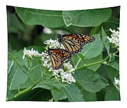 Monarch Butterfly 70 Tapestry