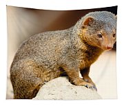 Mongoose Tapestry