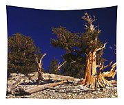 Moon And Bristlecone Pines Tapestry