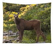 Moose Baby Sniffing Morning Air Tapestry